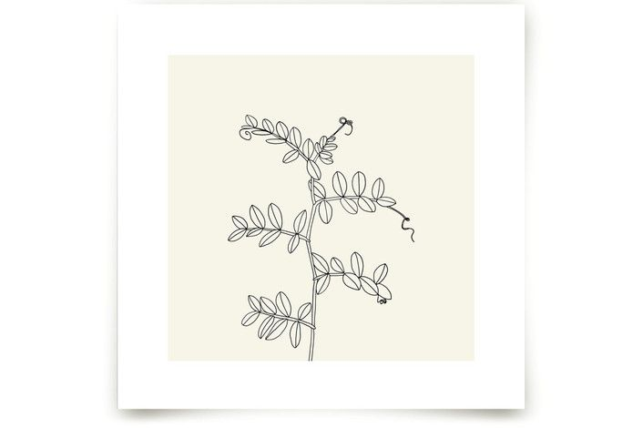 Wild Pea by Jorey Hurley at minted.com