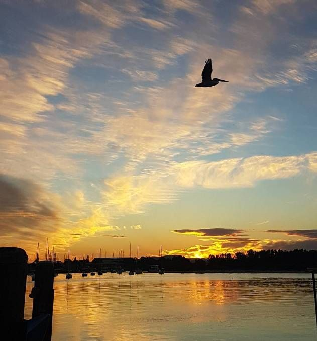 Photo by @sue_take2 taken at Port Macquarie and shared on Instagram - 'Pelican photobombing my sunset #pelican #bird #sunset #nofilter #portmacquarie'