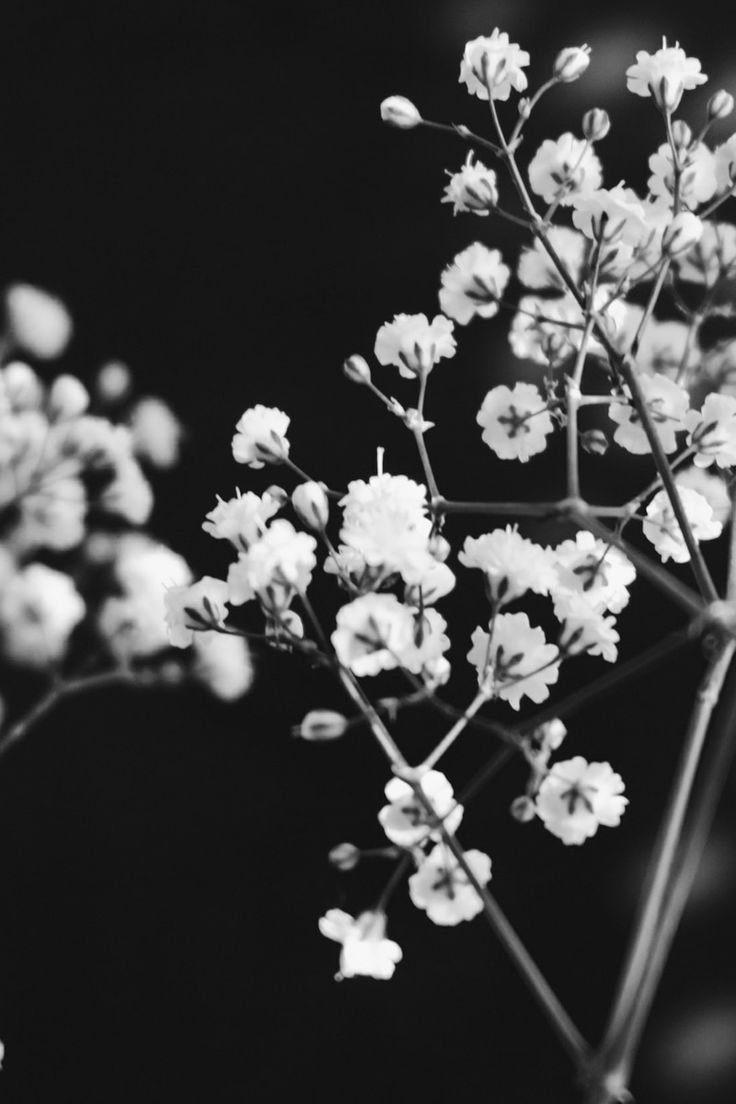 Submission by abd ulmeilk majed. See more of abd ulmeilk's work on Pexels at https://www.pexels.com/u/mloky96 #black-and-white #flowers #branch