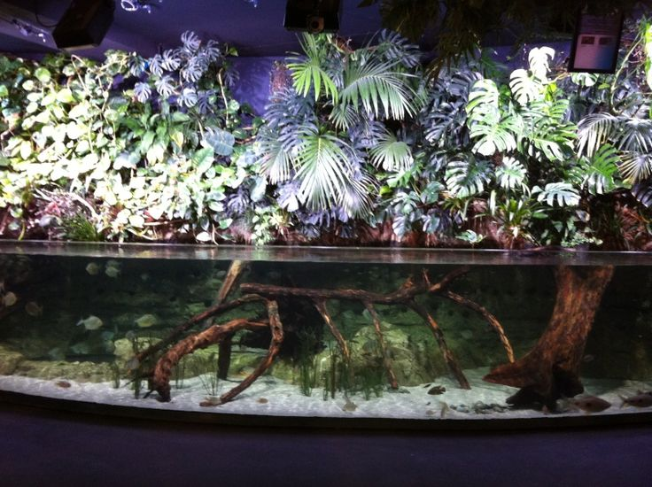17 meilleures images propos de aquarium aquaponie sur for Aquarium ouvert