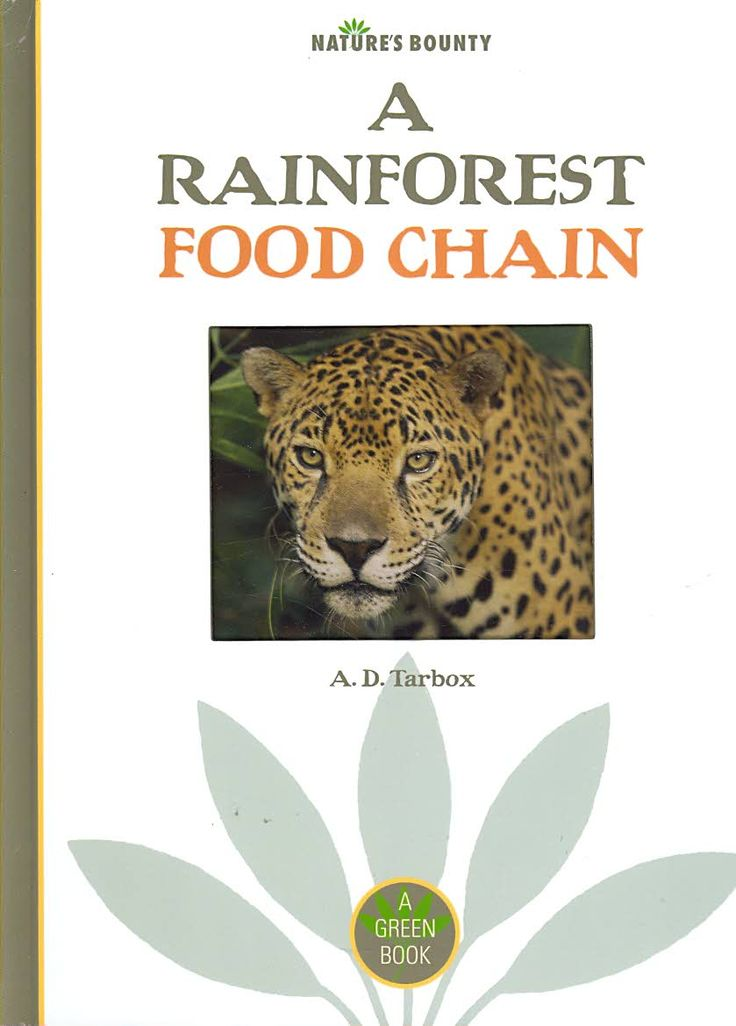 A Rainforest Food Chain