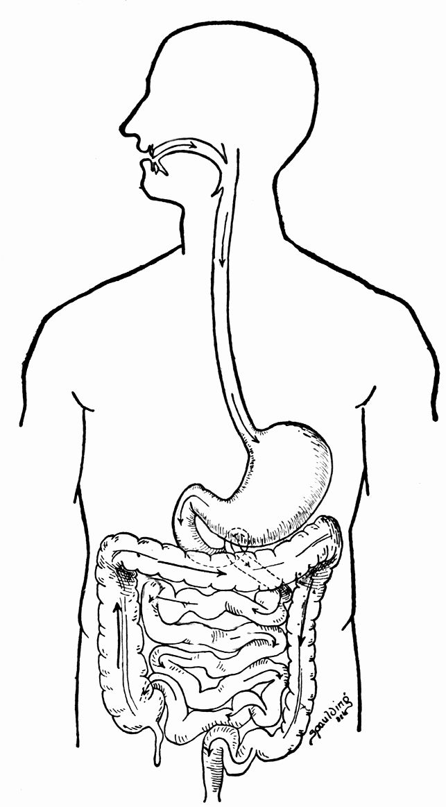 Digestive System Coloring Page Beautiful Human Body Systems Coloring Pages Coloring Home Human Body Systems Anatomy Coloring Book Human Digestive System