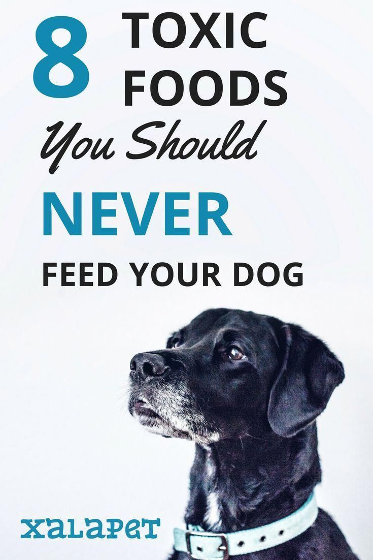 Homemade Dog Food Homepage Toxic Foods Dog Training Techniques