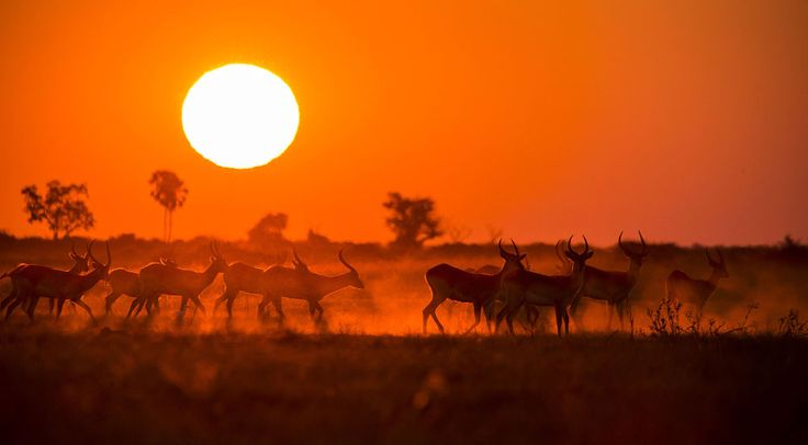 Fire and Dust by Chris Fischer on 500px