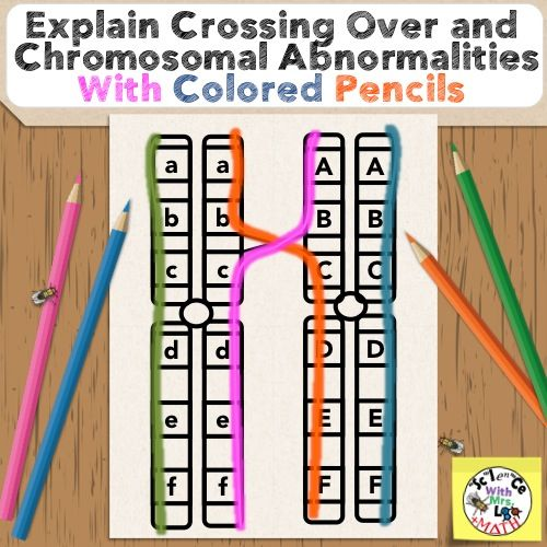 Explaining Crossing Over and Chromosomal Abnormalities with a Colored Pencils Activity!  Great for after a meiosis unit and before a genetics unit.  $ Science and Math with Mrs. Lau