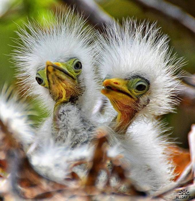 прикольные картинки с птицами молодые