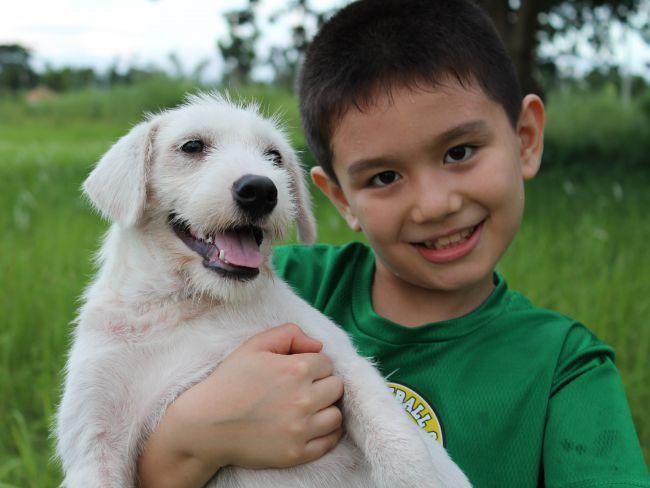 Menino encontra forma de ajudar cães abandonados:
