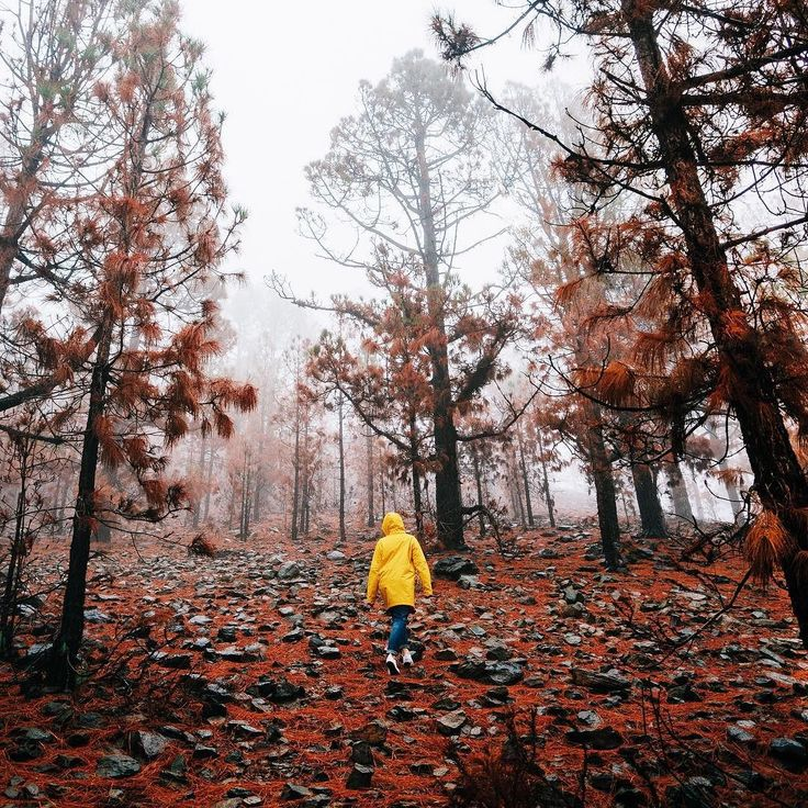 National park TeideКакие же нереальные места были у ребят в  их путешествии по Канарским островам. Кстати все фотографии из этого путешествия были сделаны на #em5mark2  Думаю что попозже мы сделаем пост об этой поездке и в подробностях напишем как здорово он себя показал и в жаркое солнце и в туман с дождем. @olympus_ru #olympus_rus #olympus by glebovaanastasia