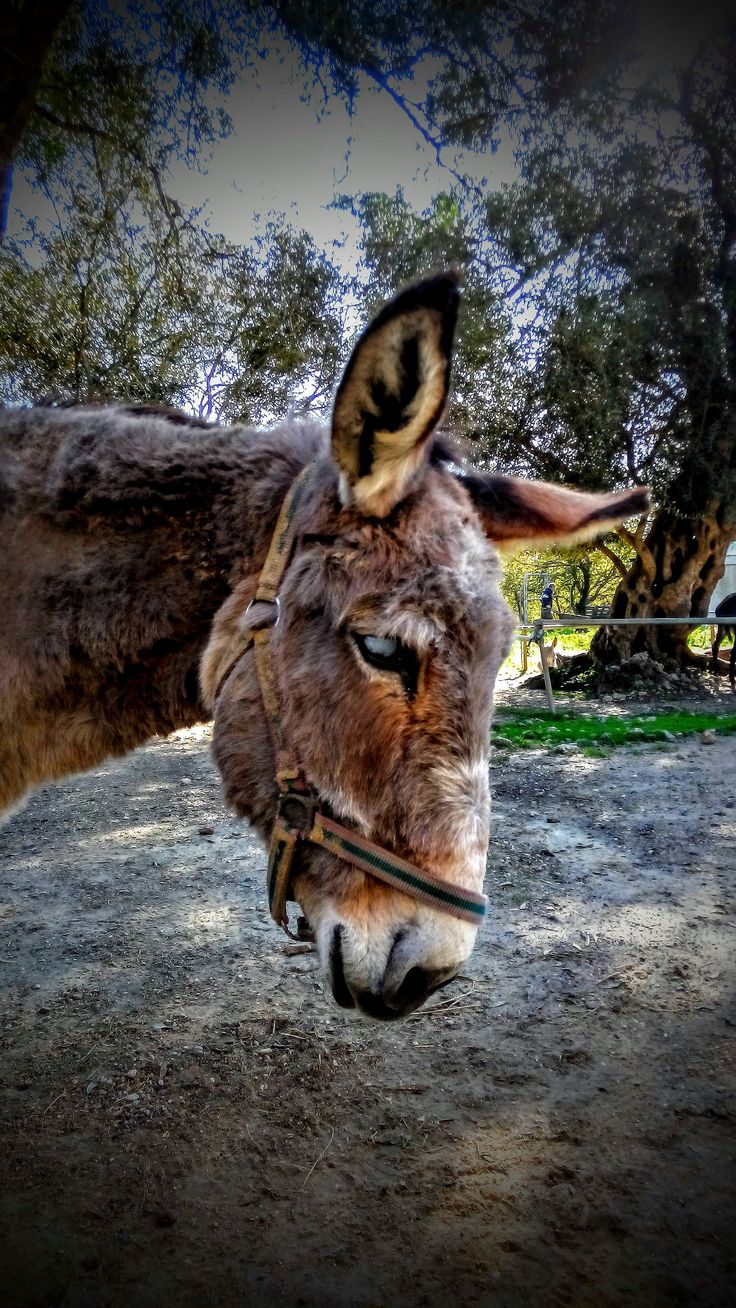 Pagi from Corfu Donkey Rescue