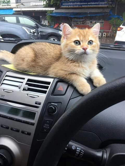 Come on - We're going to the shops to buy my cat food.Tap the link to check out great cat products we have for your little feline friend!