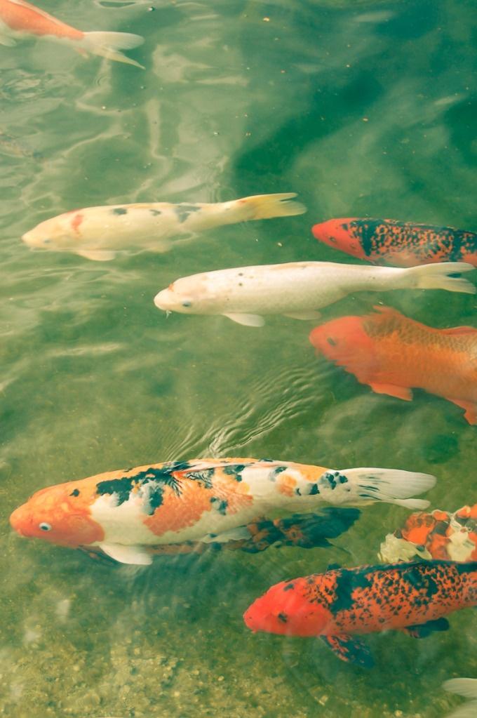 284 Best Koi Fish Ponds Images On Pinterest