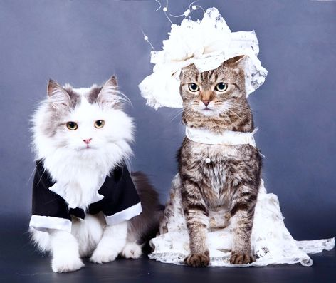 102 best images about pet weddings amp clothing on pinterest