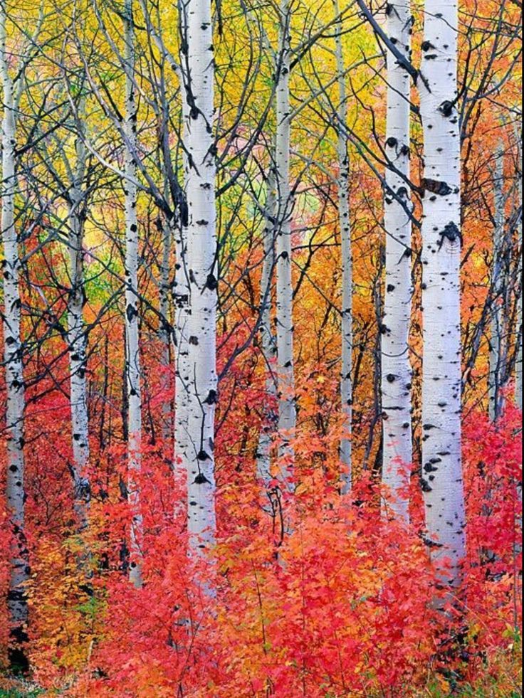 Gorgeous Autumn Colors Amongst The Trees Fall Tree Painting Tree Painting Watercolor Landscape Paintings