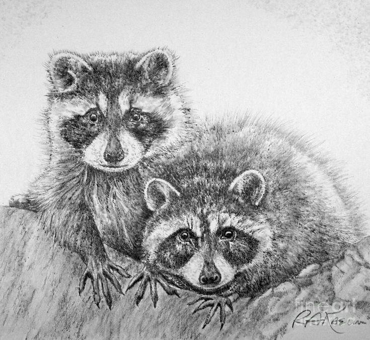 Raccoon Drawing | Raccoon Pals Drawing - Raccoon Pals Fine ... Raccoon Drawing
