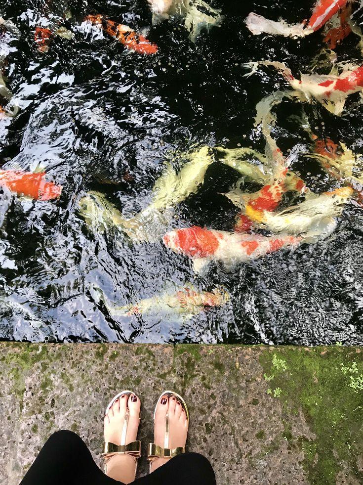 Koi . Fish . Jim Thompson . Bangkok . Thailand .
