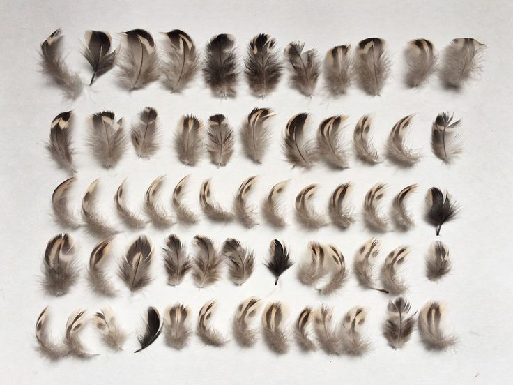 50 Natural Black Brown Cream White Feathers Bird Small Mixed Spotted Tiger 3-4cm