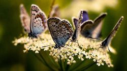 ♥: Country Photos, Beautiful Butterflies, Awesome Creatures, Butterflies Mothsdragonfli, Butterflies Wings, Beautiful Photography, Beautiful Creatures, Flower, Animal