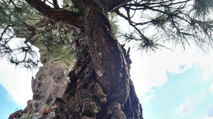 #arbol #bonsai #cielo #sky #tree #nubes #clouds
