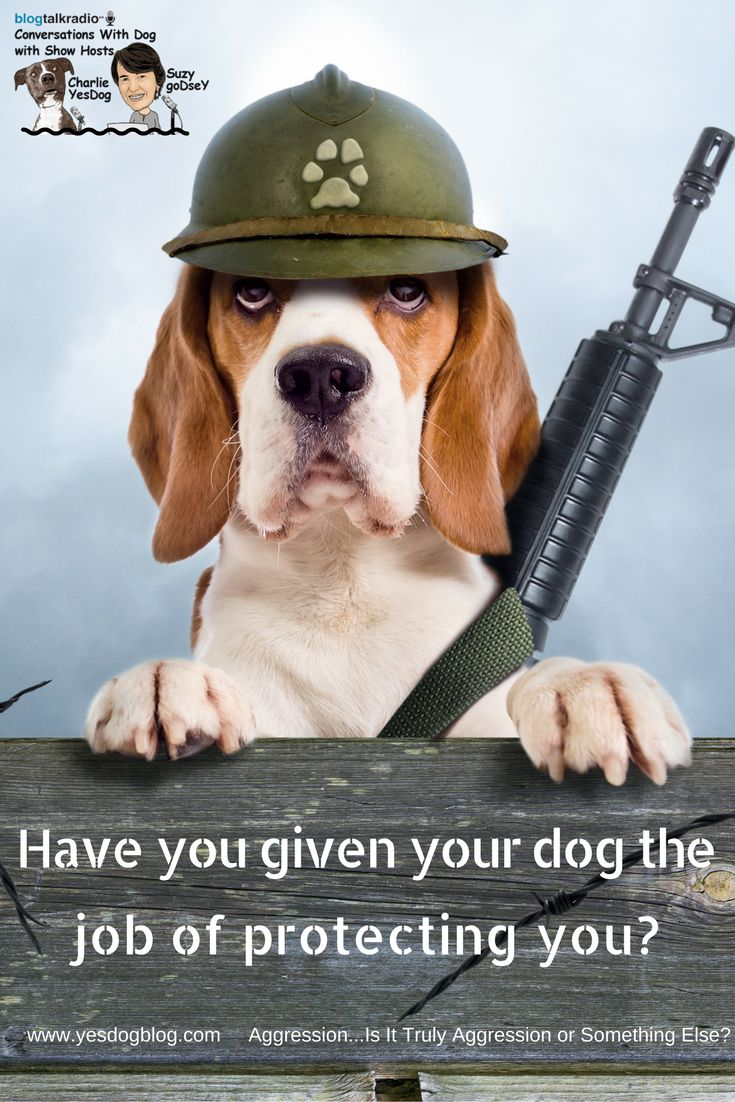 If you haven't defined the job for your dog, your dog has to come up with the definition. Has your dog decided, that protecting you means no other dog gets to come close to you? You may want to fire them from that job and then re-define it for your dog exactly the way you desire it to be.