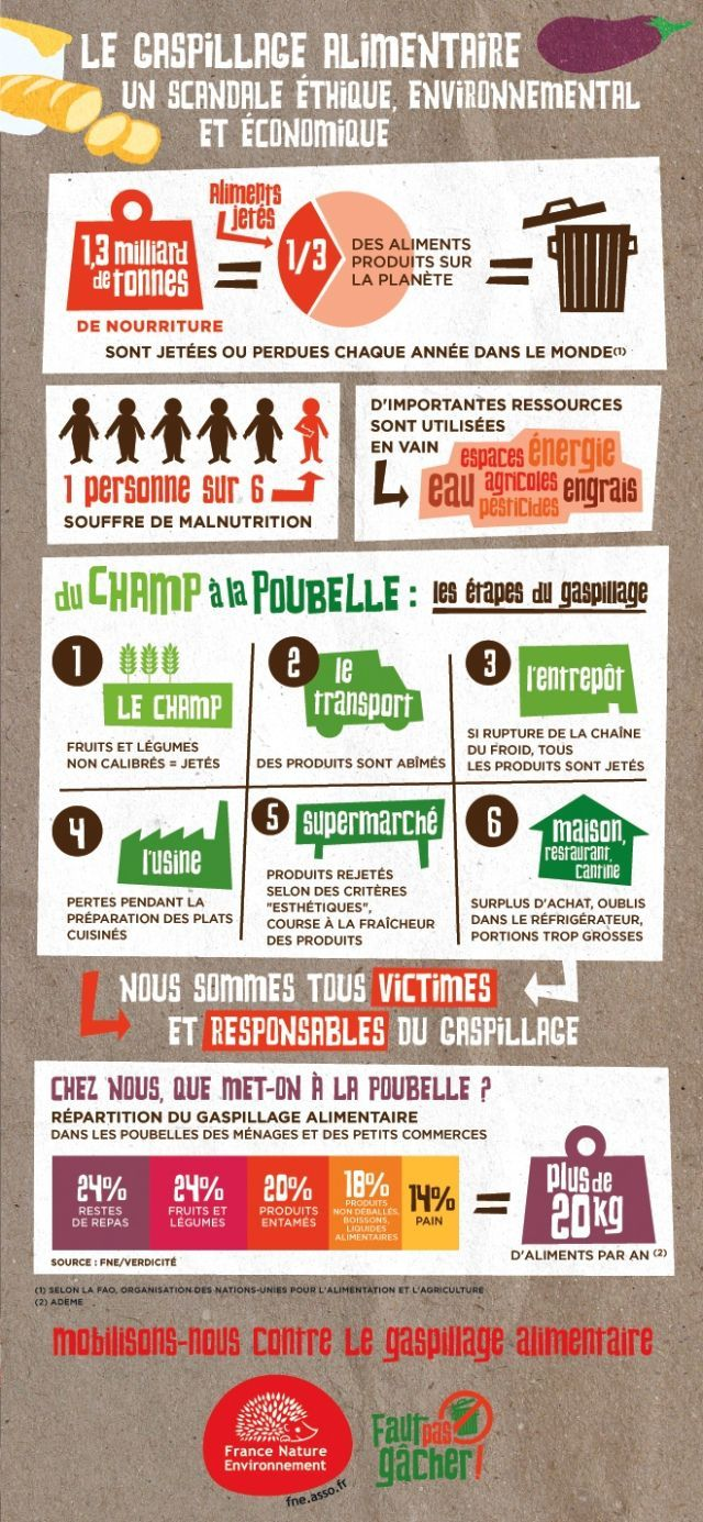 Educational infographic : INFOGRAPHIE  Le gaspillage alimentaire
