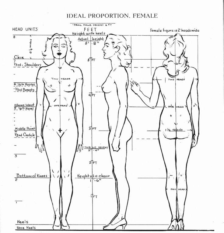 proportions femme, face, profil, dos
