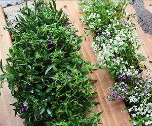Vertical Gardening (Ladies Home Journal)