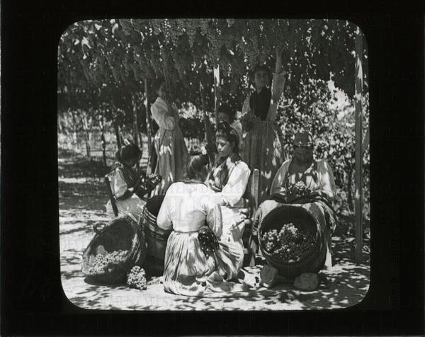 Picking, sorting and packing grapes, Malaga, Spain | saskhistoryonline.ca