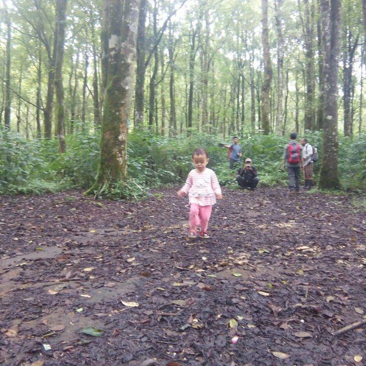 Take your track.... #tropicalwilderness #mountainskills #mountainesia #adventures #familyadventure #IndonesiaMountainSpecialist #imosa #getoutside #imosa.id #pxhero4life #childrenofmountains #childrenpassion #childrenfashion