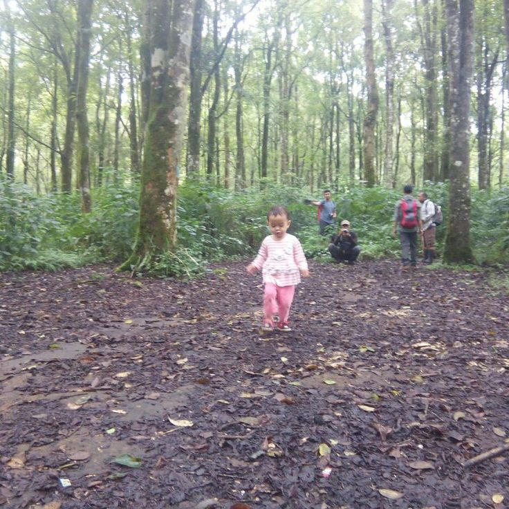 Take your track.... #tropicalwilderness #mountainskills #mountainesia #adventures #familyadventure #IndonesiaMountainSpecialist #imosa #getoutside #imosa.id #pxhero4life #childrenofmountains #childrenpassion #childrenfashion
