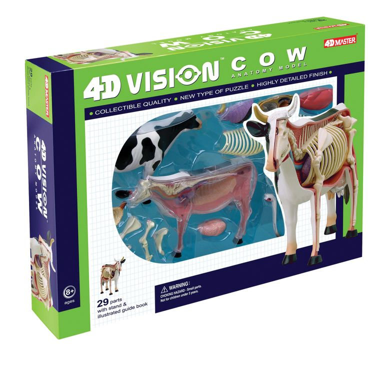 19 best TEDC Toys 4D Vision Animal Anatomy images on Pinterest ...