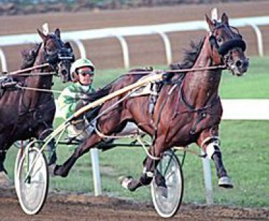 51 Best Famous Harness Horses Images On Pinterest Horse