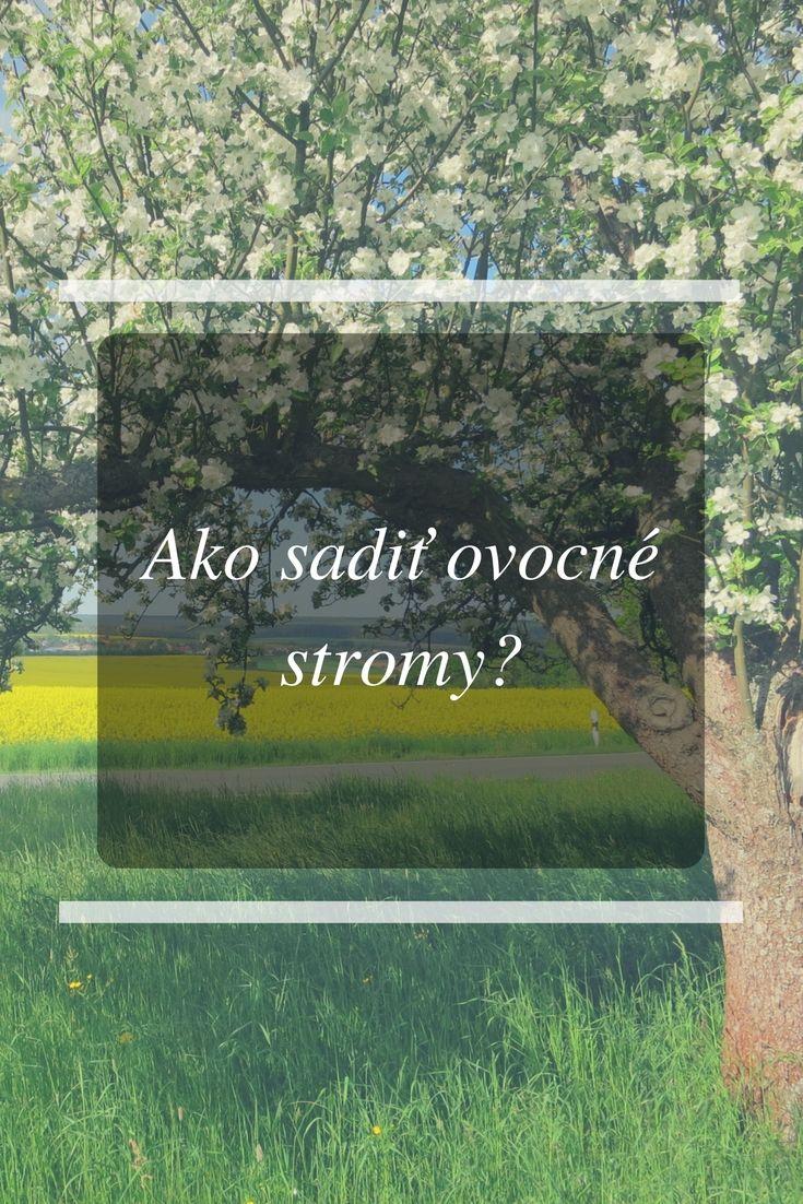 Ako sadiť ovocné stromy? Či už chcete jablká, hrušky, broskyne, citrusy – v článku nájdete všetko, čo potrebujete. http://skvelydomov.eu/ako-sadit-ovocne-stromy/