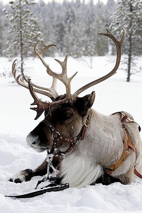 russian christmas | WINTER WONDERLAND