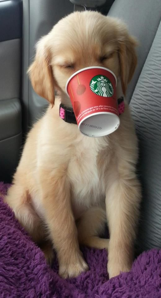 """If you ask for a """"puppuccino"""" at Starbucks, they will give you a cup of whipped cream for your dog! @Anna Totten Totten Swindell I'm taking Marley to Starbucks!"""