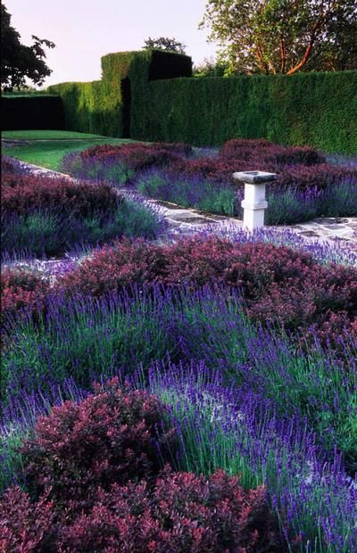 Lavender barberry knot garden. I don't usually like formal knot gardens but this has a nice, casual feel.
