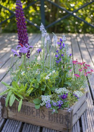 Love this pretty Butterfly Wooden Container - from The Balcony Gardener. As the name suggests, great for small outdoor spaces