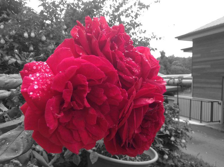 #b&w #flower