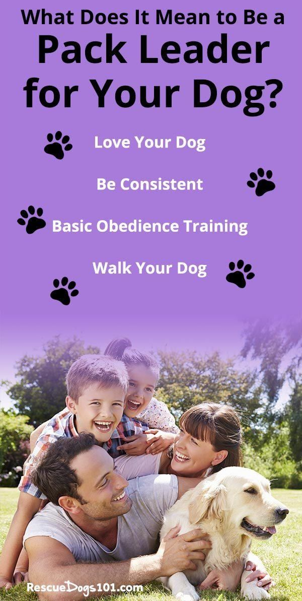 Pin By Laura Owen On Sassey1113 Dog Toilet Dog Sitting Easiest Dogs To Train