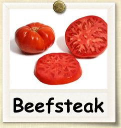 How to Grow Beefsteak Tomato | Guide to Growing Beefsteak Tomatoes