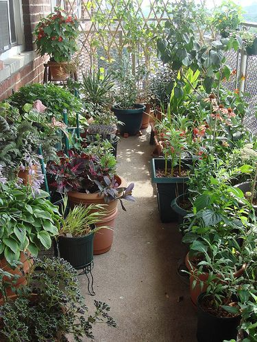 balcony garden-this is what I would do and hardly any space to walk!