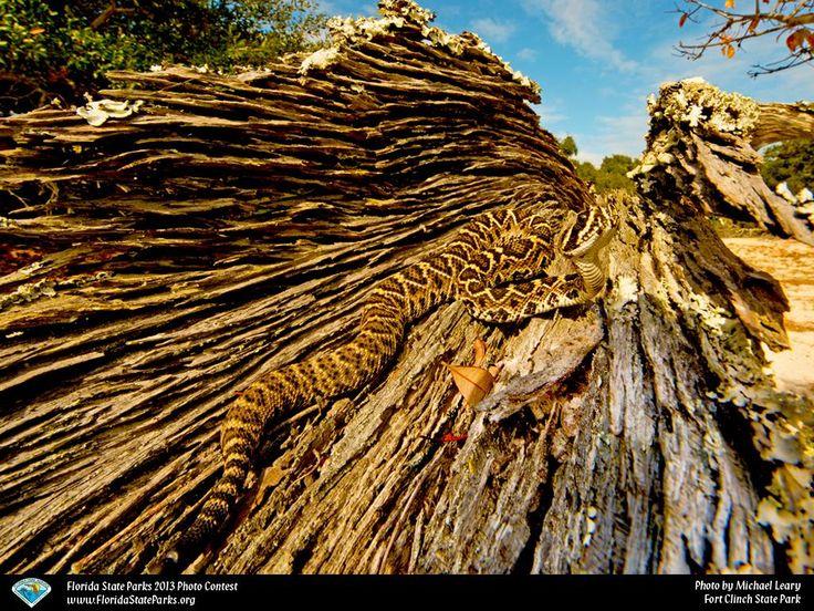 Diamondback State parks, Park, Fort