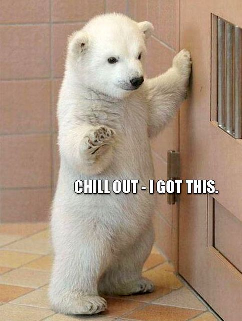 Animal Meme of the Day - A polar bear cub with a humorous caption which resembles his stance and facial expression.