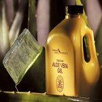 De Aloë Vera-plant is een niet-giftige, sappige plant die water opslaat in de vlezige bladeren, waardoor deze saphoudende plant in staat is om te overleven in gebieden waar weinig regen voorkomt. De Aloë Vera  biedt vele gezondheids- en voedingsvoordelen, van acnebehandeling tot huidverzorging.