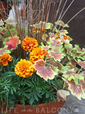 On our fall to-do list: Create a container garden #fall #gardening
