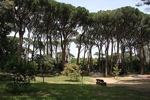 Les pins parasols du jardin botanique de sainte maxime - Les jardin de sainte maxime ...