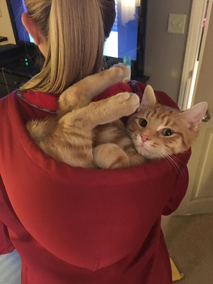pencandy:  where can i buy this hoodie???  Koop je die trui inclusief de kat?