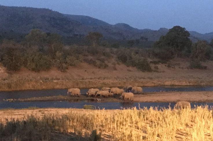#kambakuriverlodge  Www.kambakuriverlodge.co.za Visitors to the lodge!