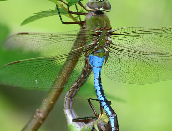 19 Best Images About Mosquito Larvae Contol On Pinterest