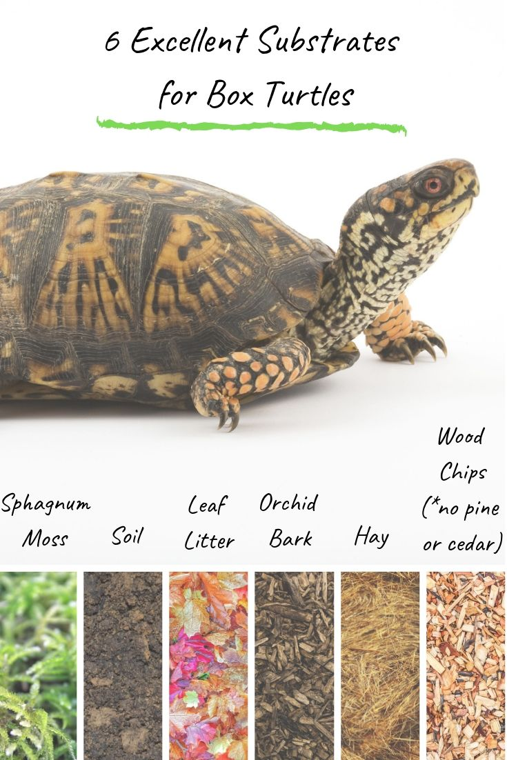 Turtleholic Clear Simplified How To Guides For Pet Turtle Owners Pet Turtle Box Turtle Box Turtle Habitat