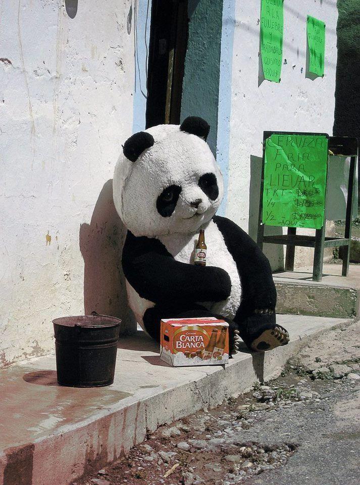 Panda Borracho Borracho Panda Pandas Arte De Panda Panda